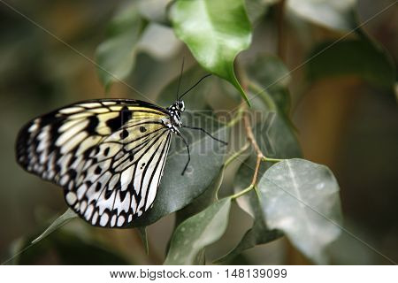 Colorful exotic Butterfly sitting on a Leaf Close up 2