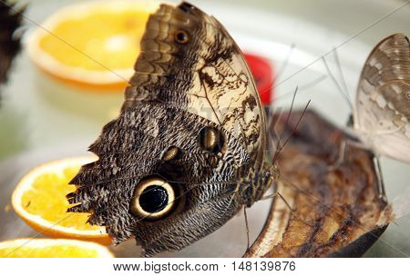 Colorful exotic Butterfly sitting on a Leaf Close up 5