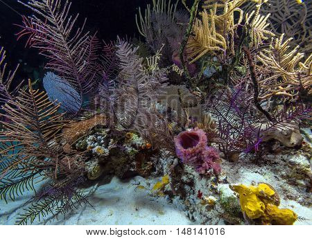 Night Underwater Background With Soft And Hard Corals, Cayo Largo