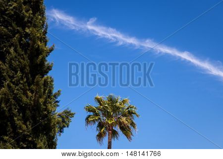 A chem trail from a jet airplane breaks up the blue cloudless sky over a desert palm tree.