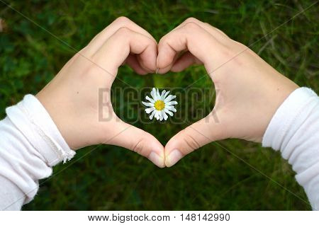 Child's Hand With Daisy