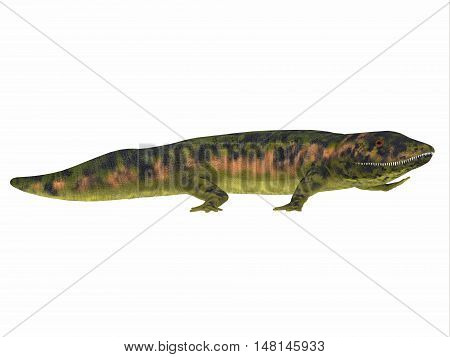 Dendrerpeton Amphibian Side View 3D Illustration - Dendrerpeton was an extinct genus of amphibious carnivore from the Carboniferous Period of Canada.