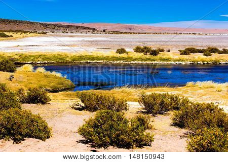 Flamingos and the beautiful Atacama Desert, Chile