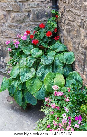 Hosta And Other Flowers At A Stone Cottage