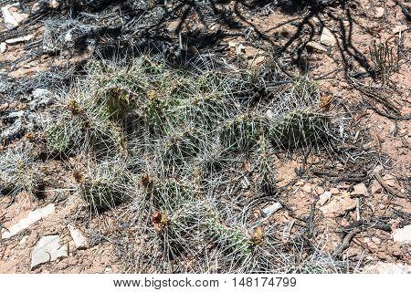 View of a lot of cactus thorns, Utah