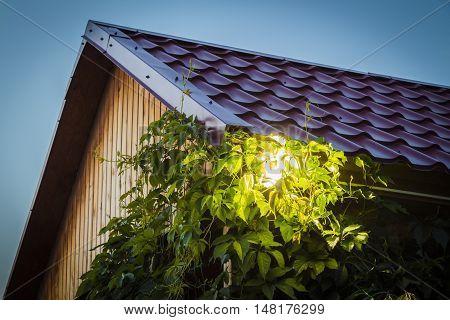 Garden LED Spotlight illuminated at night closeup