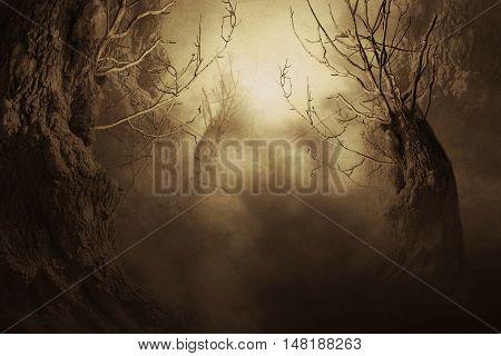 Spooky Tree In Night Mist