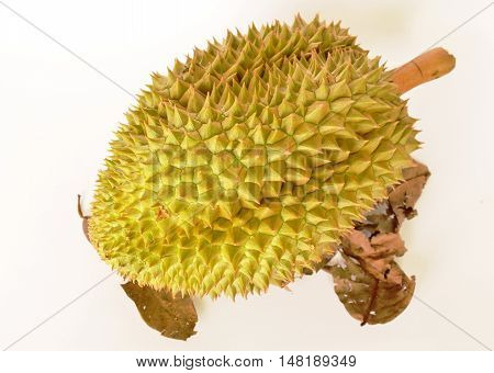 durian king of tropical fruit on white background