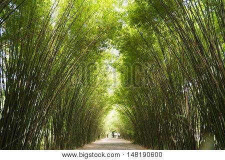 Fantastic of bamboo trees tunne in Thailand.l