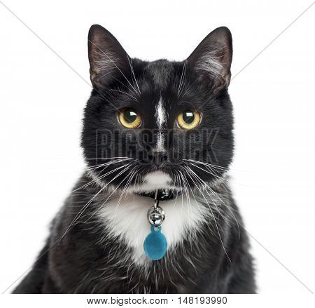 Close-up of European Shorthair, 1 year old, looking at camera, isolated on white