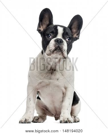 French Bulldog puppy, 4 months old, sitting and looking up, isolated on white