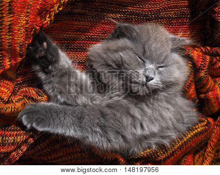 Sweet cat is sleeping on a knitted red plaid