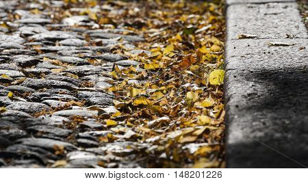 Fallen leaves on a street in Helsinki