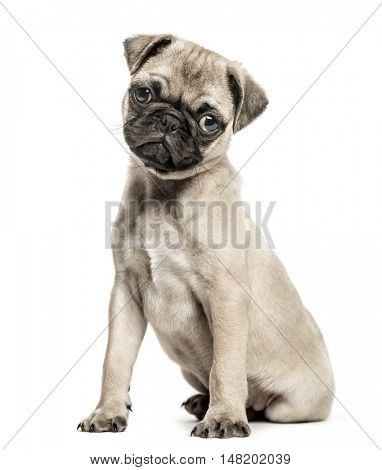 Pug puppy, 3 months old, sitting and looking at camera with tilted head, isolated on white