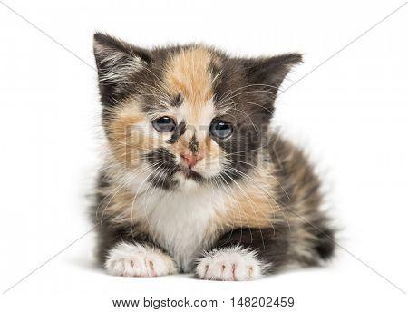 European Shorthair kitten, 1 month old, lying down, isolated on white