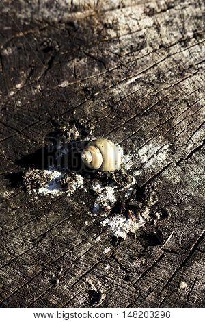 Snail Shell On A Log
