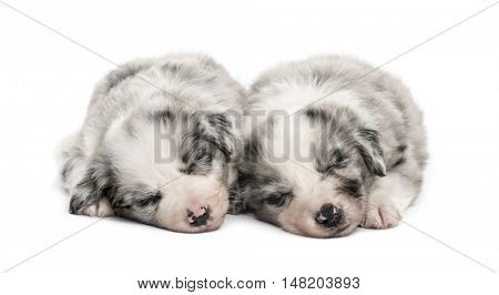 Two young crossbreed dogs sleeping relax isolated on white