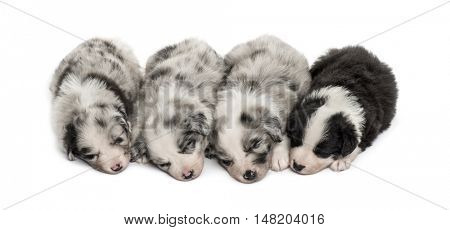 Group of crossbreed puppies sleeping in a row isolated on white