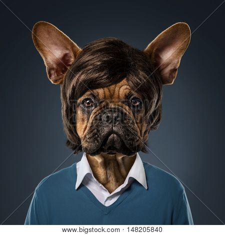Cute bulldog portrait with fancy haircut wearing human clothes over blue background