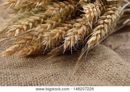 Wheat Spikes On Grain On Rustic Jute Fabric With Copy Space. Canvas Background. Rural Scene