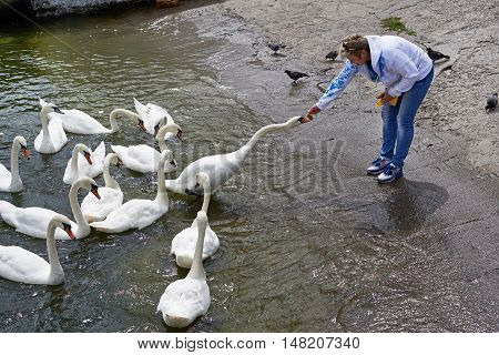 Woman Feeds Swans On Lake