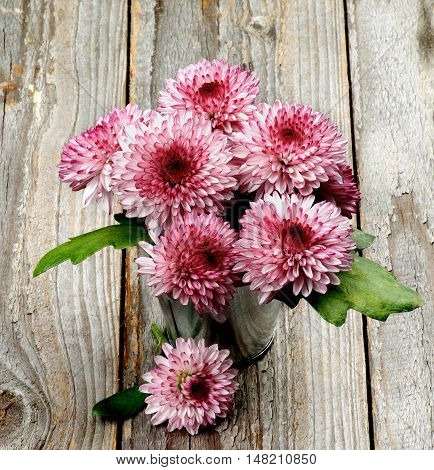 Bunch of Big Beautiful Pink and Red Chrysanthemum in Tin Bucket closeup on Rustic Wooden background