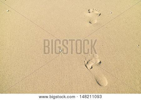 Footprints In Wet Sand Of Beach Backgorund