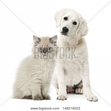 Cat and dog sitting isolated on white