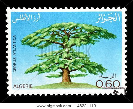 ALGERIA - CIRCA 1981 : Cancelled postage stamp printed by Algeria, that shows Cedar tree.