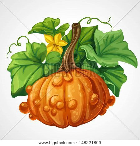 Beautifu orange Halloween pumpkin with green leaves isolated on a white background