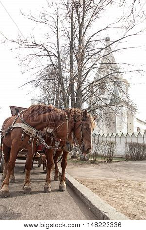 Two Horses In Harness In The Old Russian City. Suzdal, Golden Ring, Traveling In Russia.