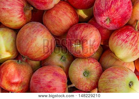 Close Up Of The Red Ripe Apples As Background.