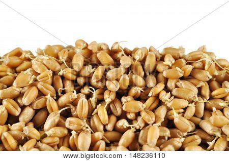Wheat germs background with copy space. Helthy food.