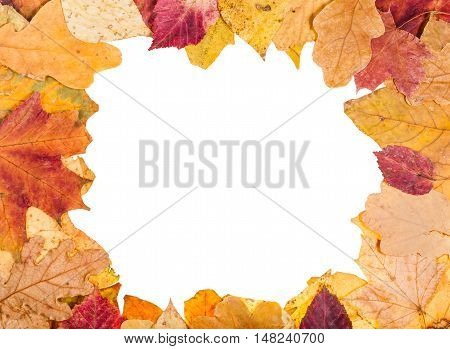 Picture Frame From Yellow Fallen Leaves