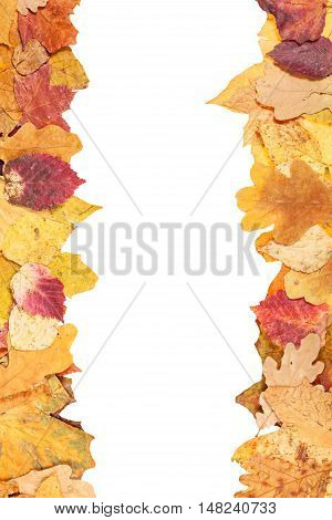 Left And Right Frames From Yellow Autumn Leaves
