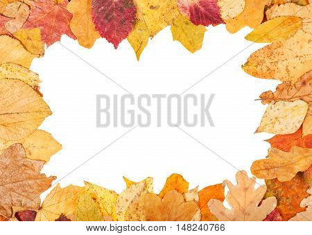 Picture Frame From Yellow Autumn Leaves
