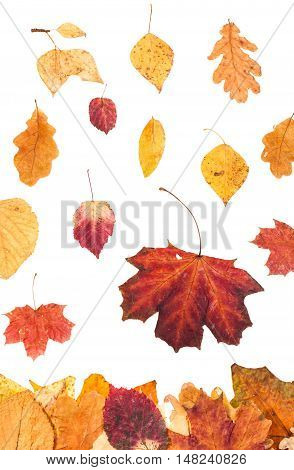 Falling Red And Yellow Leaves Isolated