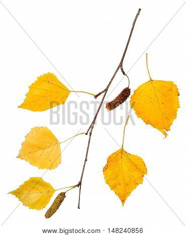 Branch With Yellow Autumn Leaves Of Birch Tree