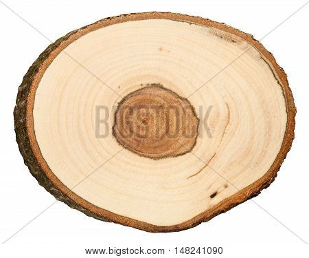 Cross Section Of Bird Cherry Tree Trunk Isolated