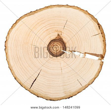 Annual Rings In Cross Section Of Bird-cherry Tree