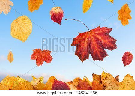 Falling Autumn Leaves And Blue Sunrise Sky