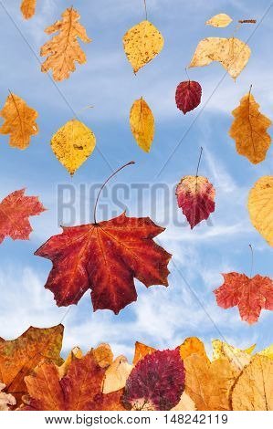 Falling Autumn Leaves And Cloudy Blue Sky