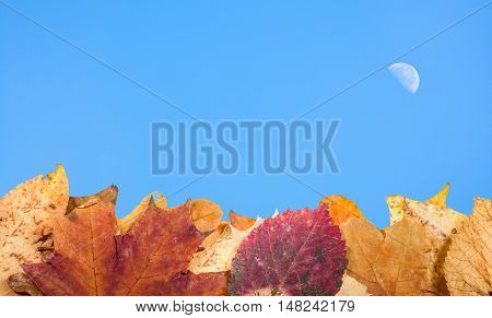 Autumn Fallen Leaves And Blue Sky With Moon
