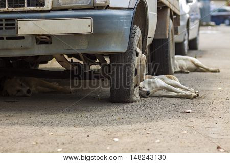 Dogs resting under an old car with flat tires