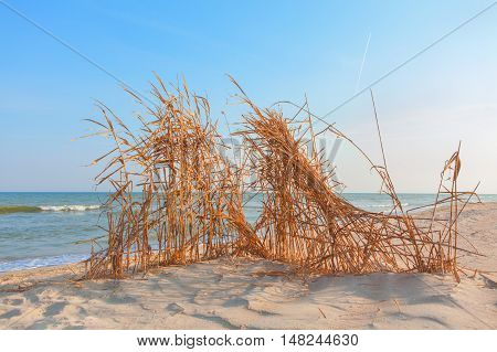 shelter made of reeds on the sandy beach