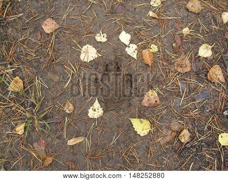 The Mark Of The Beast In The Autumn Forest On The Ground