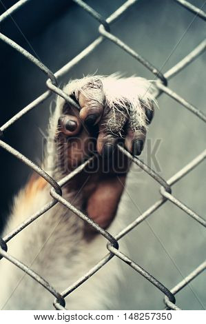 Paw of monkey holding cage at zoo