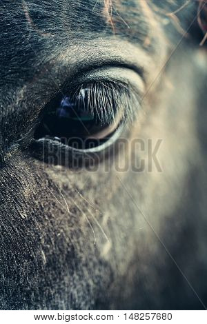 Eye of black close up macro photo