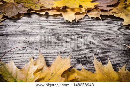 Grunge wooden natural background frame with yellow maple leaves, empty space for text