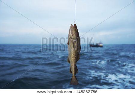 codfish on fishing-rod on background of sea